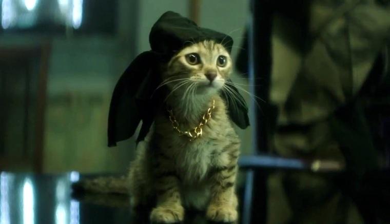 gangsta cat.jpeg